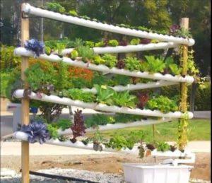 aquaponic vertical gardening