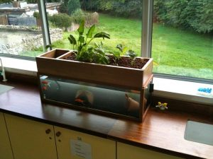 indoor aquaponics