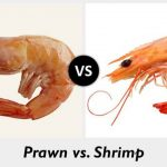 Pro's and Con's of Having an Aquaponics Shrimps/Prawns System