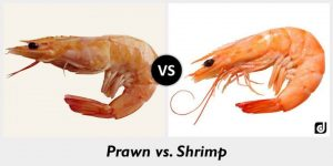 shramp and prawn in aquaponics