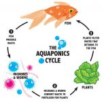 What Is Aquaponics and How Does It Differ From Other Food Production Systems?