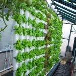 Build A Vertical Aquaponics System