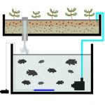 Flood And Drain Design for Aquaponics