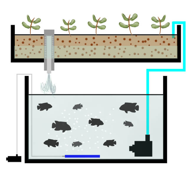 aquaponics flood and drain
