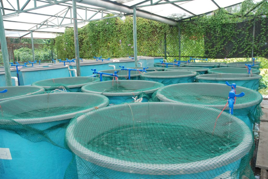 fish farm with aquaponics