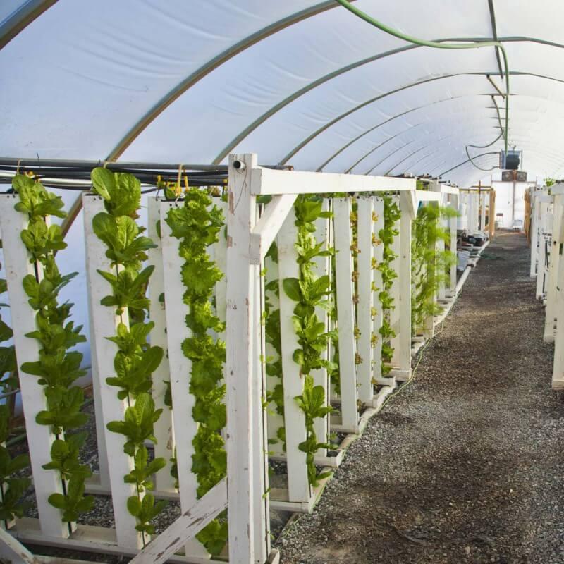 zipgrow vertical aquaponics system