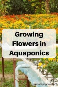 aquaponics flowers pinterest