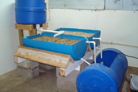 barrelponics split barrel setup