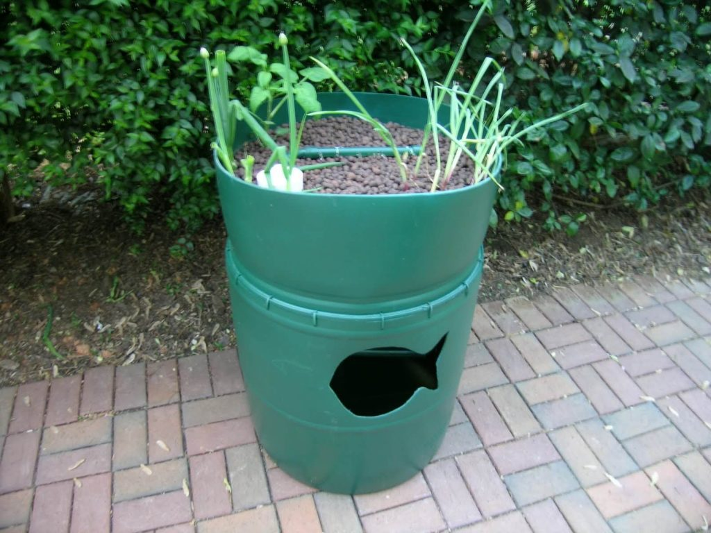 example of barrel aquaponics setup