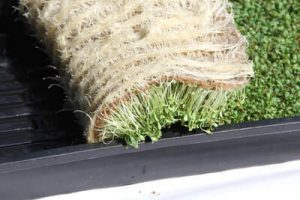 microgreens on hemp mat