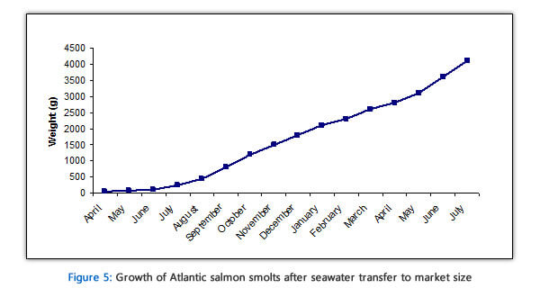 salmon growth rate