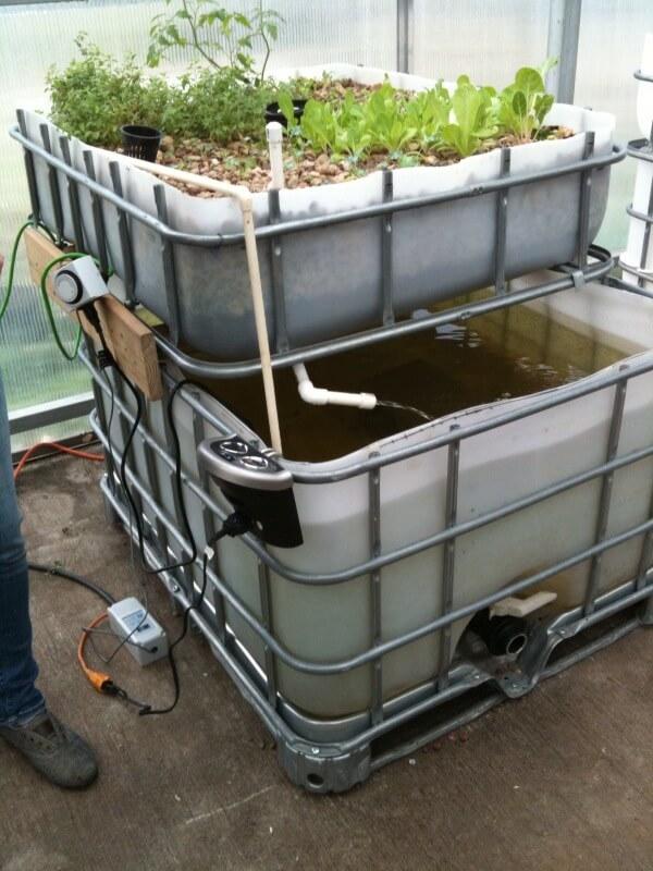 ibc aquaponics growbed