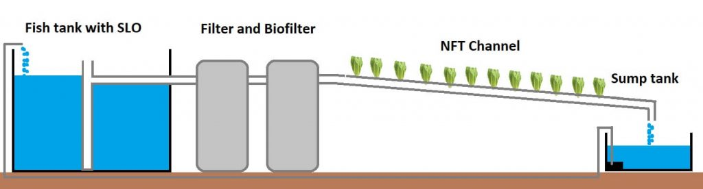 nft aquaponics simplified